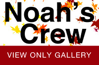 Noah's Crew VIEW ONLY GALLERY